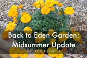Back to Eden Garden: Midsummer Update