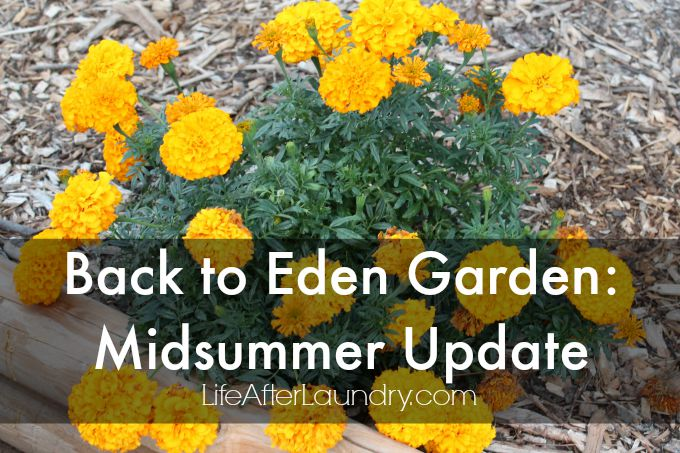 Back to eden garden midsummer update via LifeAfterLaundry.com